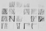 Untitled [Trees]; Pilbrow, David; 1969; 1982:0062:0001