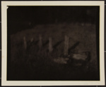 Untitled [Field with wooden posts]; Connor, Linda; 1974; 1984:0004:0002