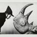 Dali with Rhinoceros; Halsman, Philippe; 1956; 1987:0014:0003