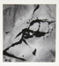 [Untitled, abstraction of a natural form]; Wells, Alice; ca. 1965; 1972:0287:0086