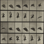 Animal Locomotion, Plate 765; Muybridge, Eadweard; 1887; 1982:0016:0001