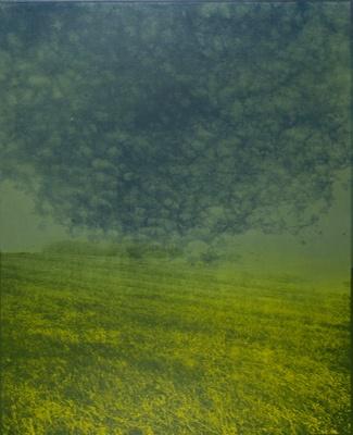 Untitled [Field]; Lyons, Joan; 1971; 2000:0066:0002