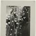 Christmastide ; Jaquish, Richard; c.a. 1970; 1971:0128:9999
