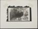 Untitled [Savannah sparrow]; Enos, Franklin; ca. 1971; 1972:0029:0005