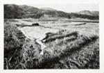 Kamaitachi #27; Hosoe, Eikoh; 1968; 1987:0049:0029