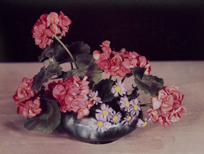 Untitled [Geraniums]; Genesee Camera Club; undated; 1978:0116:0001