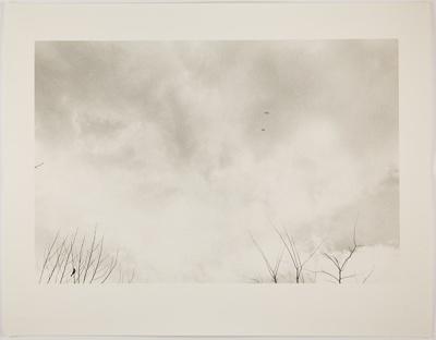 Birds; deLory, Peter; 1973; 1978:0163:0011