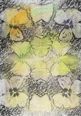 Untitled [Flowers]; Lyons, Joan; ca. 1979; 1987:0090:0020