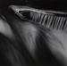 Untitled [Abstract image]; Jachna, Joseph; 1965; 1978:0042:0001