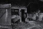 Untitled [Horses]; Saur, Francoise; ca. 1970s; 1986:0017:0005
