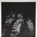 [Untitled, Abstractions of natural forms]; Wells, Alice; ca. 1965; 1972:0287:0173