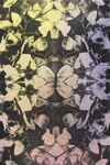 Untitled [Flowers]; Lyons, Joan; 1979; 1987:0090:0014