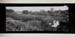 Untitled [Cornfield and Pond]; Bretz, Robert L.; 1982:0042:0001