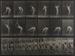 Animal Locomotion, Plate 385; Muybridge, Eadweard; 1887; 1973:0046:0001