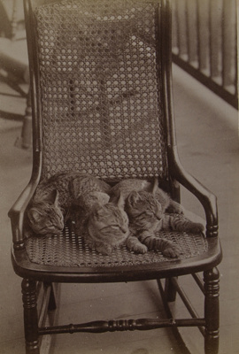Untitled [Three cats]; Stanton, Henry; 1892; 1982:0015:0002