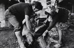 Untitled [Hog slaughtering]; Saur, Francoise; ca. 1970s; 1986:0015:0002