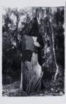 Our Hearts Were False; Laughlin, Clarence John; 1940; 2011:0019:0067