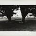 [Tree Landscape]; Kuligowski, Eddie; 1973; 1986:0014:0003