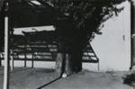 Untitled [Tree in shadow]; Dane, Bill; ca. 1976; 2011:0014:0030
