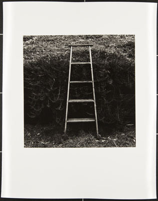 Untitled [Ladder against bushes]; Cooper, John; ca. 1983; 1983:0016:0006