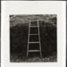 Untitled [Ladder against bushes]; Cooper, John; ca. 1983; 1983:0016:0006