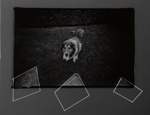 Untitled [Dog]; Sample, Tricia; 1973; 1986:0008:0008