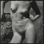 Untitled [Nude torso]; Dutton, Allen; ca. 1970s; 2000:0142:0009