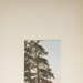 Untitled [Pine tree]; Thompson, Fred; ca. 1900s; 1986:0026:0001