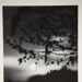 [Untitled, images of branches at sunrise]; Wells, Alice; ca. 1965; 1972:0287:0178