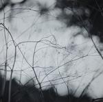 Grasses II; Prather, Winter; 1968; 1981:0025:0014