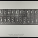 Cricket; batting; back cut. [M. 292]; Da Capo Press; Muybridge, Eadweard; 1887; 1972:0288:0069