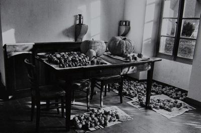 Untitled [Pumpkins]; Saur, Francoise; ca. 1970s; 1986:0017:0001