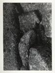 Untitled ; Siskind, Aaron; 1977:0017:0004