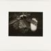 Untitled [Plant with tank]; Carlson, Dale S.; 1977; 2011:0012:0005