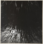 [Untitled, Abstraction of water and plant material]; Wells, Alice; ca. 1962; 1972:0287:0142
