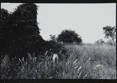 Untitled [from Plastic Love Dream]; Mertin, Roger; ca. 1969; 1976:0031:0002