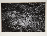 [Untitled, natural abstraction] ; Wells, Alice; ca. 1963; 1973:0137:9999