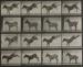 Animal Locomotion, Plate 658; Muybridge, Eadweard; 1887; 1973:0047:0001