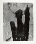 Durango, Mexico, 21; Siskind, Aaron; 1961; 1971:0187:0001