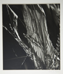 [Untitled, Abstraction of natural forms]; Wells, Alice; ca. 1965; 1972:0287:0172