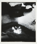 [Untitled, abstraction of a natural form]; Wells, Alice; ca. 1964; 1972:0287:0075