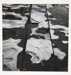 [Untitled, abstraction of a natural form]; Wells, Alice; 1963; 1972:0287:0082