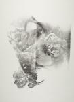Untitled [Flowers and face]; Lyons, Joan; 1974; 1975:0006:0006