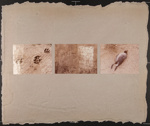 Untitled [Footprints, graffiti, bird]; Stuart, Michelle; ca. 1980; 1981:0123:0039