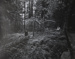 Untitled [Woman in woods]; Toth, Carl; ca. 1974; 1976:0042:0002