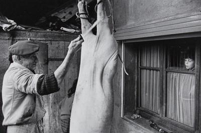 Untitled [Hog slaughtering]; Saur, Francoise; ca. 1970s; 1986:0015:0007
