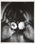 [Untitled, abstraction of a natural form] ; Wells, Alice; ca. 1964; 1972:0287:0159