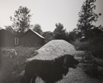 Untitled [Two dogs]; Toth, Carl; ca. 1974; 1976:0042:0008