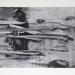 [Untitled, Abstraction of tree bark]; Wells, Alice; ca. 1965; 1972:0287:0176