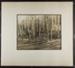 [birch tree forest]; Hahn, Alta Ruth; ca.1930; 1982:0020:0028